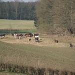 Les chevaux sortent tous les jours